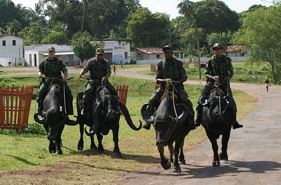 Búfalos utilizados como transporte para a polícia local (Guia do Litoral - UOL)