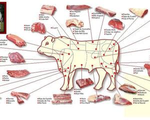 Partes da carne bovina. Adaptado de: slides da disciplina Técnica Dietética I (curso de Nutrição e Metabolismo, Faculdade de Medicina de Ribeirão Preto/USP)