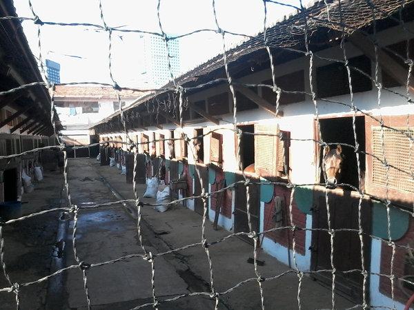 Cavalos em cocheiras, em uma das várias estrebarias (ou estábulos) do hipódromo. Foto: ViniRoger