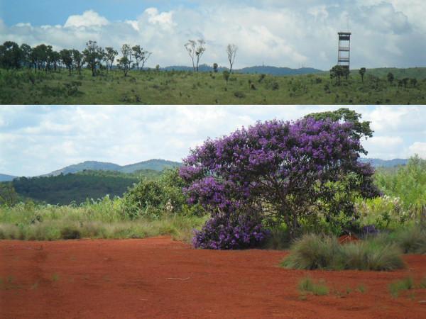 Parque do Juquery: Torre de observação e pista de pouso. Fotos: ViniRoger
