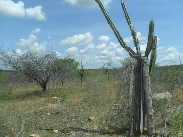 Caatinga à beira da CE-265/166 (km 21), em Quixeramobim. Foto: ViniRoger