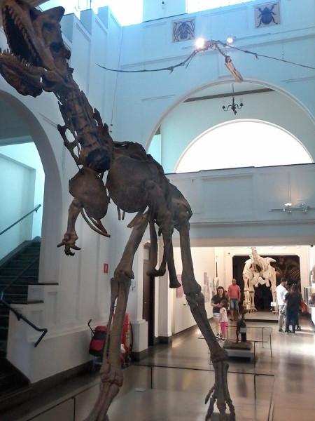 Reconstituições de esqueletos de dinossauros no Museu de Zoologia da USP. Foto: ViniRoger