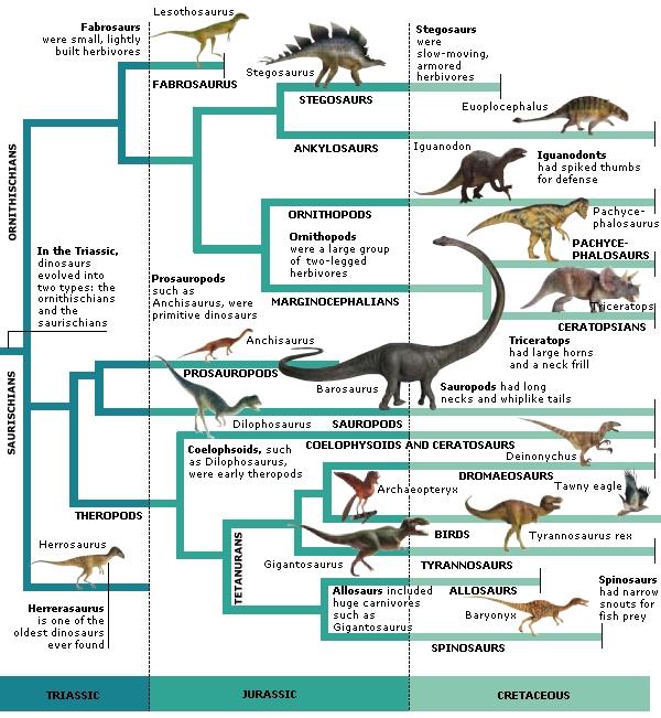 Filogenia dos dinossauros representada em um dendrograma. Fonte: Fact Monster