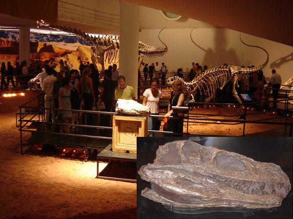 Exposição dinos na Oca (São Paulo, 2016): reconstituições em gesso de esqueletos de dinossauro - o que sobrou de ossos de dinossauro está petrificado (foto do detalhe) ou faltam muitas partes, impossibilitando fazer uma montagem desse tipo. Fotos: ViniRoger