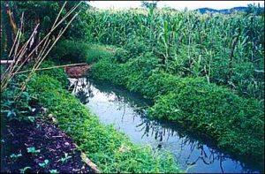 Terreno de Phiri com jardins de chuva. Fonte: Iesambi