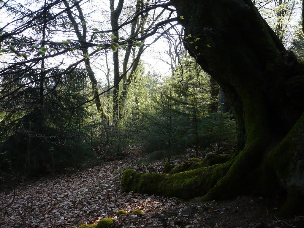 Dark Tree, por Eddi 07- Free Stock