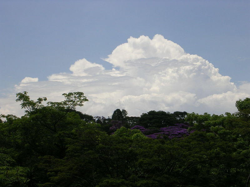 Cumulus congestus no Parque Cientec em São Paulo/SP (jan 2007) - Nikon E3200 1/1155s ISO50 13,0mm. Foto: ViniRoger