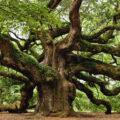 Carvalho. Foto: Nick Polizzi (Red Oak)