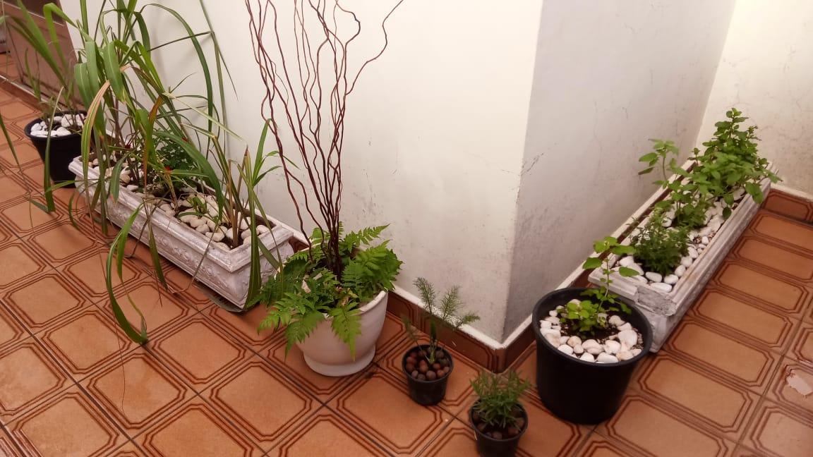 Plantas em vasos: capim-limão, citronela, roseira, samambaia, erva-doce, lavanda e outras. Foto: ViniRoger.
