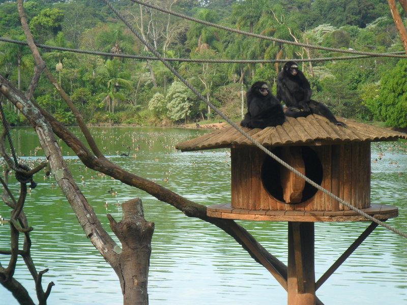 Zoológico de São Paulo - PEFI. Foto: ViniRoger